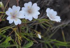 229_12-04_Flower_10