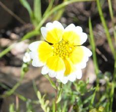 229_12-04_Flower_11