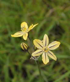 229_12-04_Flower_12