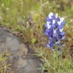 229_12-04_Flower_13