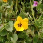 229_12-04_Flower_2