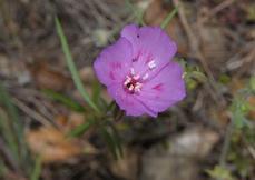 229_12-04_Flower_3