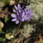 229_12-04_Flower_7