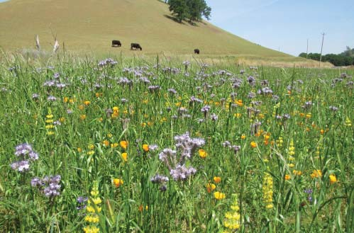 Guardians of the Range:  A Linkage Between Bees and Beef