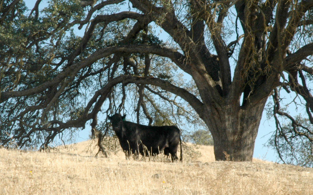 Guardians of the Range:  Protected Ranch Adds Habitat Diversity