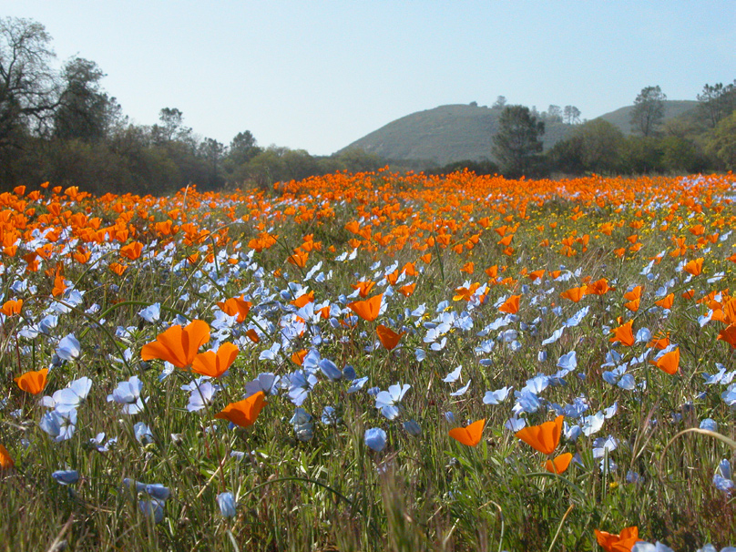 Guardians of the Range:  Ranching with Wildflowers and Wildlife
