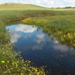 Blue Skies, Bonnie Fogarty,  Oakdale