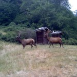 Elk-Mindy-Nicoletti-Gerber