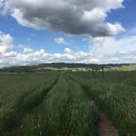Fresh-Spring-Grass-Elaina-Cuzick-Montera