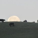 Full-Moon-Arleah-Fields-Coyote