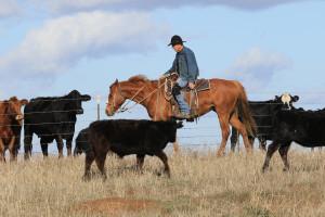 Lone-Cowboy-Tom-Muehleisen-Suisun