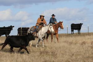 Roundup on the Range, Tom Muehleisen, Suisun