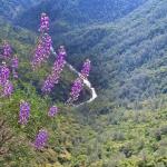 Spring-Bloom-Shana-Tomlinson-Chowchilla