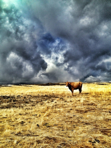 Storms-Coming-Shana-Tomlinson-Chowchilla-2nd-Place